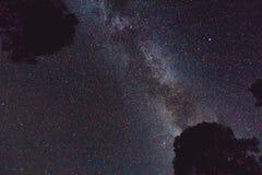 Γαλακτώδης τρόπος και μερικά δέντρα στα βουνά επιτραπέζια χρήση φωτογραφιών νύχτας τοπίων εγκαταστάσεων εικόνας ανασκόπησης όμορφ Στοκ Φωτογραφία