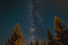Γαλακτώδης τρόπος πίσω από τα δέντρα πεύκων που θερμαίνονται από το φως φωτιών Στοκ Φωτογραφία