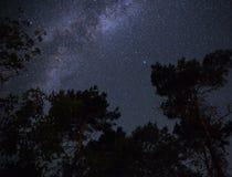 Γαλακτώδης τρόπος στο νυχτερινό ουρανό πέρα από το δάσος Στοκ Φωτογραφία