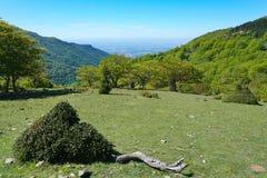 Γαλλία Massif des Alberes Pyrenees-Orientales στοκ εικόνα