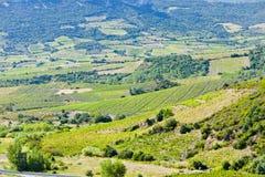 Γαλλία vineyars στοκ εικόνες με δικαίωμα ελεύθερης χρήσης