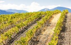 Γαλλία vineyars στοκ φωτογραφίες με δικαίωμα ελεύθερης χρήσης