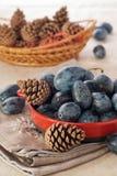 Γαλλικό δαμάσκηνο με το pinecone Στοκ φωτογραφία με δικαίωμα ελεύθερης χρήσης