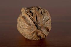 γαλλικό ξύλο καρυδιάς Στοκ εικόνα με δικαίωμα ελεύθερης χρήσης