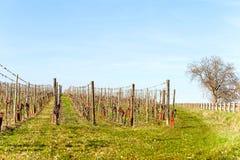 Γαλλικό τοπίο άνοιξης με τις κοιλάδες του αμπελώνα altai στοκ εικόνες με δικαίωμα ελεύθερης χρήσης