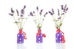 Γαλλικό lavender στα βάζα Στοκ φωτογραφία με δικαίωμα ελεύθερης χρήσης