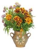γαλλικό marigold κανατών Στοκ Εικόνες