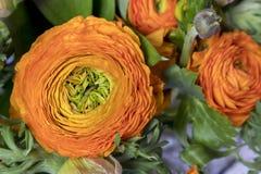 Γαμήλια ανθοδέσμη των νεραγκουλών, anemones και Ruscus Στοκ Εικόνα