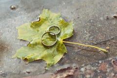 Γαμήλια δαχτυλίδια πεσμένο στο φθινόπωρο φύλλο σφενδάμου Στοκ Εικόνες