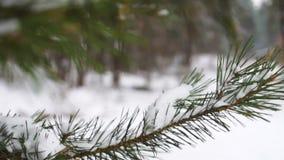 Γαμήλια δαχτυλίδια στον πράσινο κλάδο στο χιόνι, εκλεκτική εστίαση κλείστε επάνω κίνηση αργή φιλμ μικρού μήκους