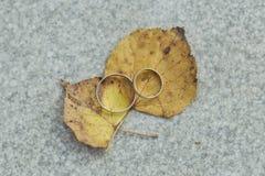 Γαμήλια δαχτυλίδια του άσπρου χρυσού στο πεσμένο φύλλο Στοκ Φωτογραφίες