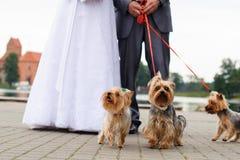Γαμήλια ζεύγος και σκυλιά Στοκ φωτογραφία με δικαίωμα ελεύθερης χρήσης