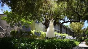 Γαμήλιο φόρεμα σε ένα δέντρο απόθεμα βίντεο