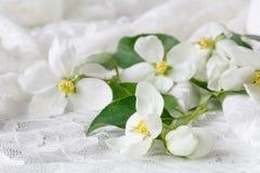 Γαμήλια έννοια με τα λουλούδια Apple-δέντρων με δύο δαχτυλίδια Στοκ φωτογραφία με δικαίωμα ελεύθερης χρήσης