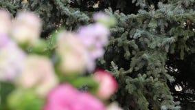 Γαμήλια ανθοδέσμη των τριαντάφυλλων στο υπόβαθρο Δυναμική αλλαγή της εστίασης κλείστε επάνω φιλμ μικρού μήκους