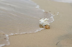Γαμήλια δαχτυλίδια και κοράλλι στην άμμο Στοκ φωτογραφίες με δικαίωμα ελεύθερης χρήσης