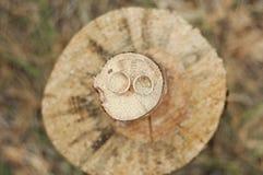 Γαμήλια δαχτυλίδια σε μια ξύλινη περικοπή πριονιών στοκ εικόνες