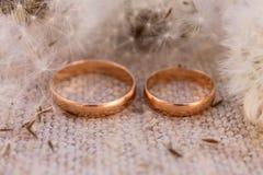 Γαμήλια δαχτυλίδια στις πικραλίδες υποβάθρου Στοκ Εικόνα