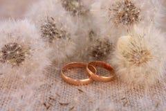 Γαμήλια δαχτυλίδια στις πικραλίδες υποβάθρου Στοκ φωτογραφία με δικαίωμα ελεύθερης χρήσης