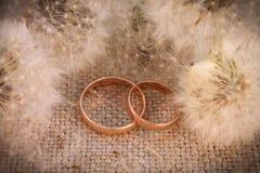 Γαμήλια δαχτυλίδια στις πικραλίδες υποβάθρου Στοκ Εικόνες