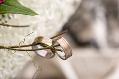 Γαμήλια δαχτυλίδια στον κλάδο Στοκ Εικόνες