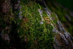 Γαμήλια δαχτυλίδια στο βρύο στοκ φωτογραφία με δικαίωμα ελεύθερης χρήσης