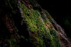 Γαμήλια δαχτυλίδια στο βρύο στοκ φωτογραφία
