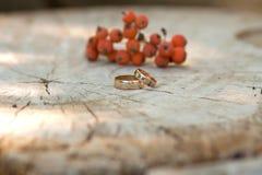 Γαμήλια δαχτυλίδια στο υπόβαθρο Rowan Στοκ εικόνες με δικαίωμα ελεύθερης χρήσης