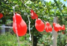 Γαμήλια διακόσμηση με τα κόκκινα μπαλόνια, υπαίθρια Στοκ Εικόνες