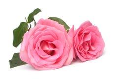 Γαμήλια ρόδινα τριαντάφυλλα Στοκ Εικόνες