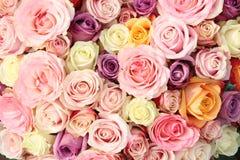 Γαμήλια τριαντάφυλλα κρητιδογραφιών στοκ εικόνα