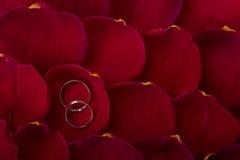 Γαμήλιες ζώνες στα ροδαλά πέταλα Στοκ Εικόνα