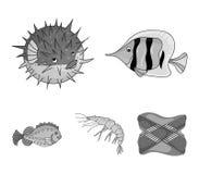 Γαρίδες, ψάρια, σκαντζόχοιρος και άλλα είδη Τα ζώα θάλασσας καθορισμένα τα εικονίδια συλλογής στο μονοχρωματικό απόθεμα συμβόλων  Στοκ Εικόνες