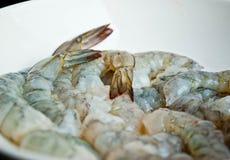 γαρίδες Στοκ εικόνα με δικαίωμα ελεύθερης χρήσης