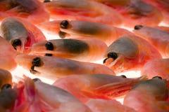 γαρίδες Στοκ φωτογραφία με δικαίωμα ελεύθερης χρήσης