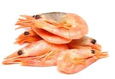γαρίδες Στοκ Εικόνες