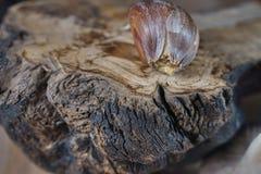 Γαρίφαλο σκόρδου σε ένα παλαιό κομμάτι του ξύλου στοκ εικόνα με δικαίωμα ελεύθερης χρήσης