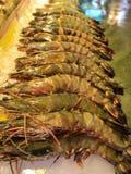 Γαρίδες που επιδεικνύονται ακατέργαστες Στοκ Φωτογραφία