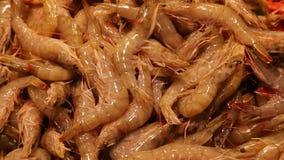 Γαρίδες στην αγορά ψαριών στη Βαρκελώνη, Ισπανία απόθεμα βίντεο