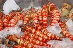 Γαρίδες στον πάγο Νότια Ινδία Στοκ Εικόνες