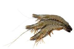 γαρίδες Στοκ Εικόνα