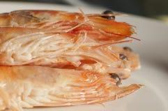 γαρίδες Στοκ Φωτογραφίες