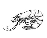 Γαρίδες Doodle Στοκ Εικόνες