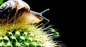 Γαστερόποδα Snale του EBIC Στοκ εικόνες με δικαίωμα ελεύθερης χρήσης
