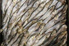 γαστρονομική κλυπέα ψαριών Στοκ Φωτογραφίες