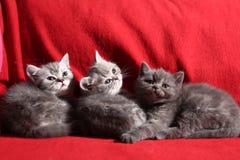 γατάκια λίγα τρία Στοκ φωτογραφία με δικαίωμα ελεύθερης χρήσης