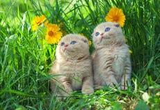γατάκια λίγα δύο Στοκ εικόνα με δικαίωμα ελεύθερης χρήσης