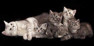 γατάκια και γάτα μητέρων Στοκ Εικόνες