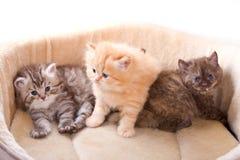 γατάκια λίγα Στοκ Φωτογραφίες
