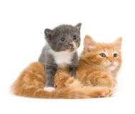 γατάκια μια σειρά δύο μωρών Στοκ Φωτογραφία